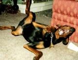 346_dog_laughing
